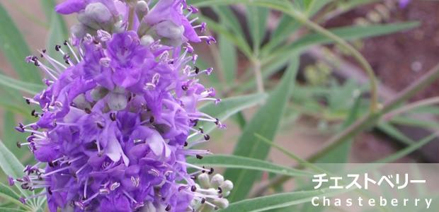 http://an-herb.com/images/mc_chasteberry.jpg